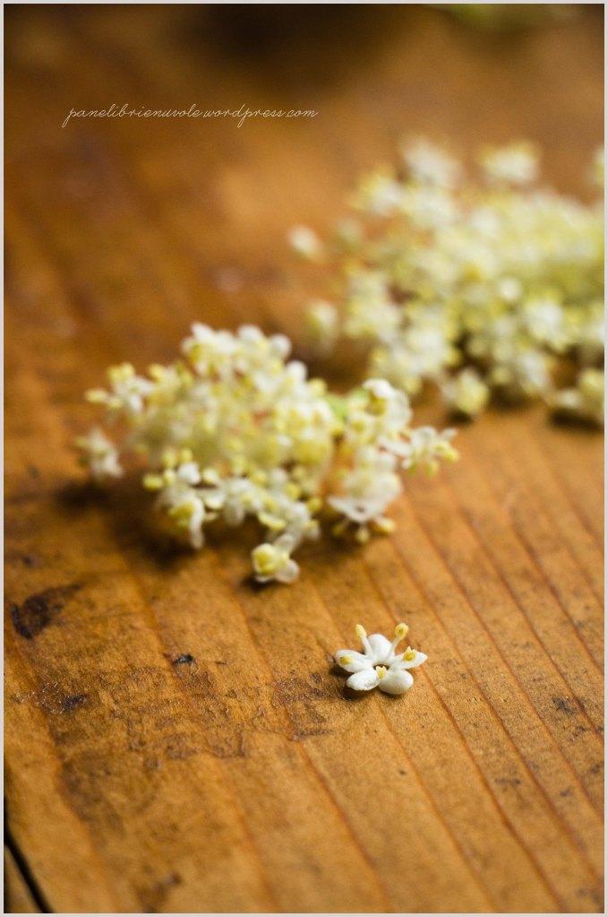 risolatte ai fiori di sambuco-3
