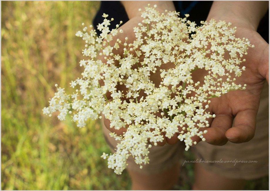risolatte ai fiori di sambuco-7
